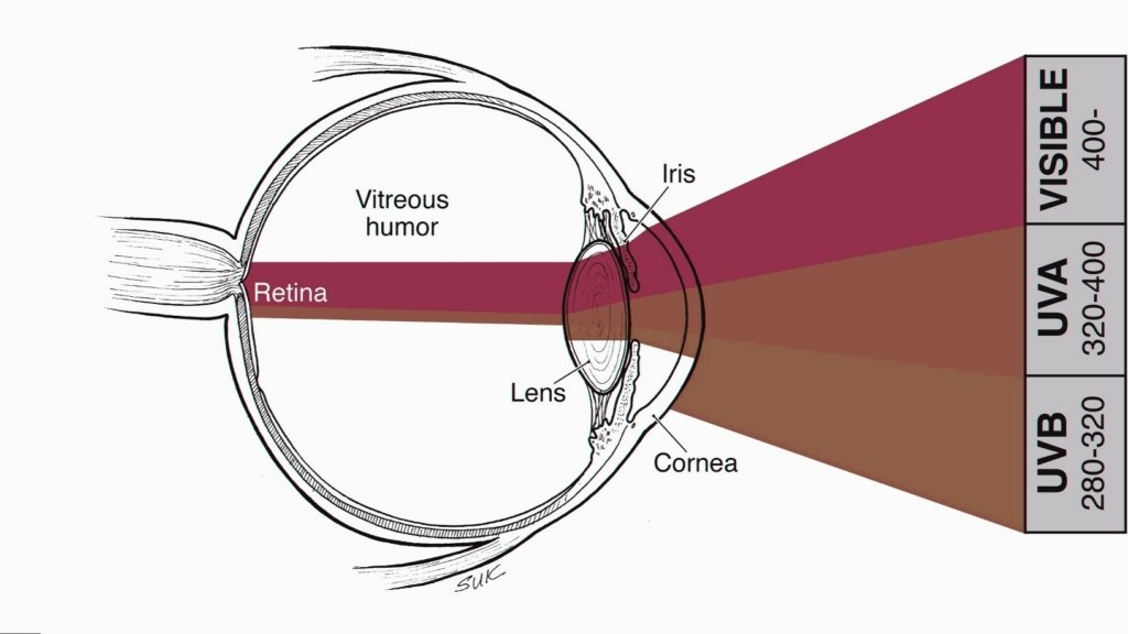 How UV affects the eye